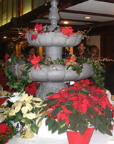 poinsettia fountain